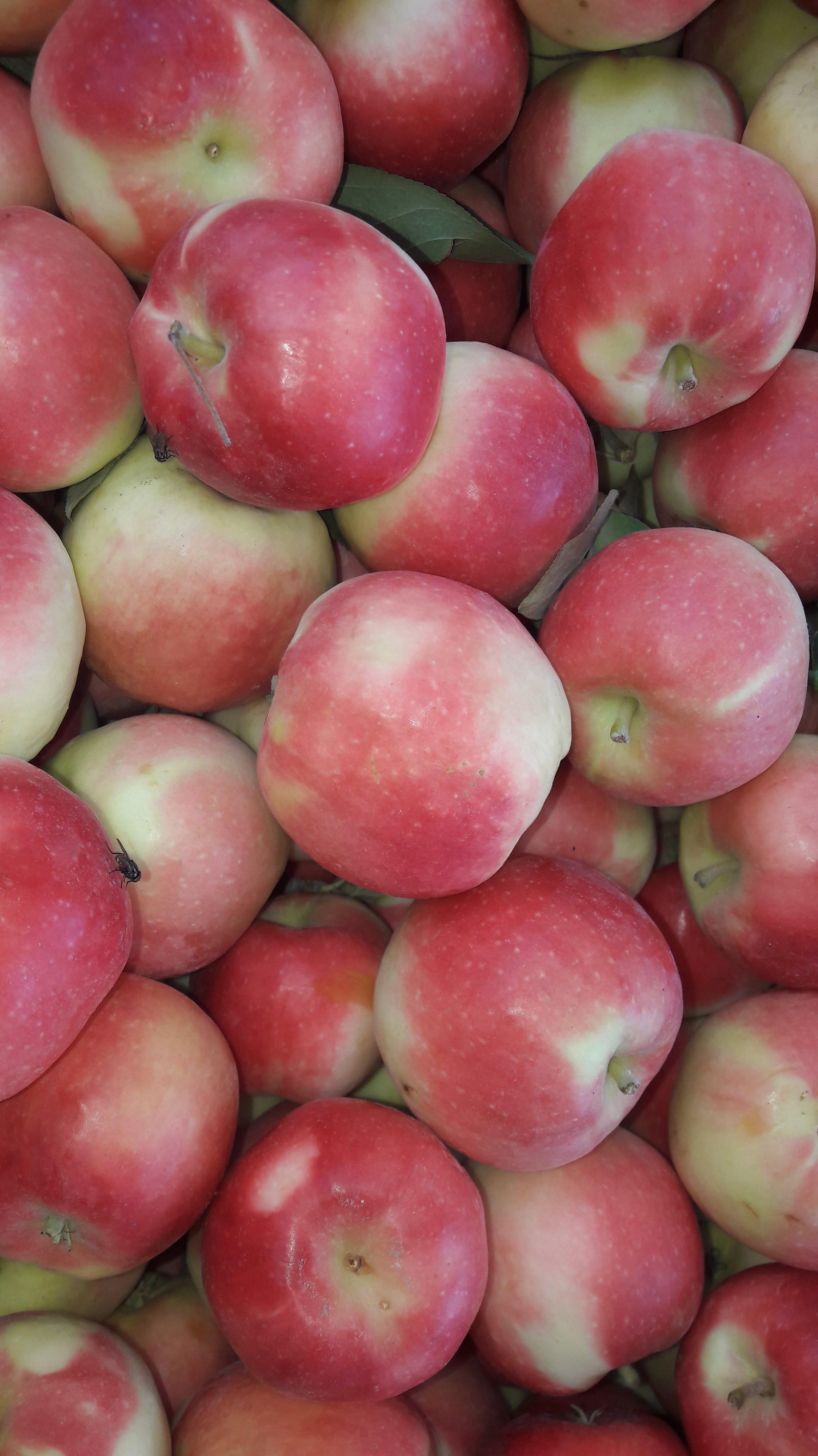 رژیم لاغری با سیب